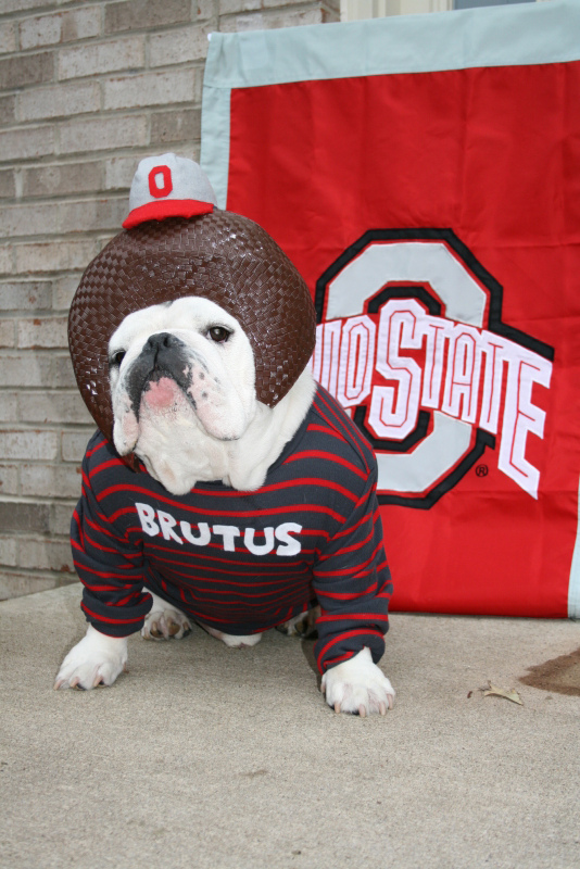 1) Buckeyes (Because we can't get enough of them here.)