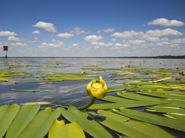 15. Lake Waccamaw State Park