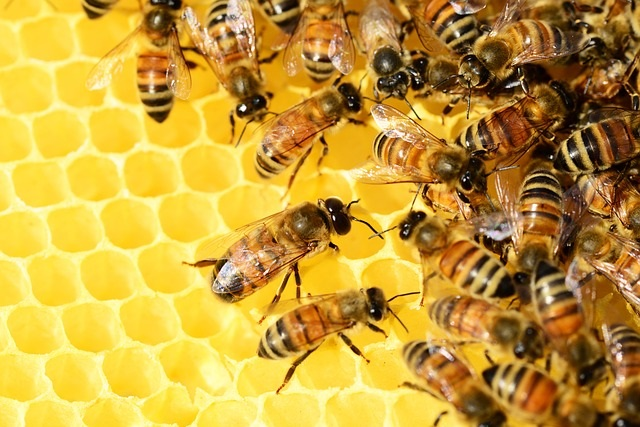 1. Beehive, Alabama - Beehive was originally named for a bee yard located along Wire Road near the Macon County line.