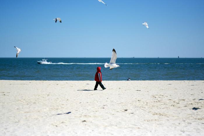 Buckroe Beach bird