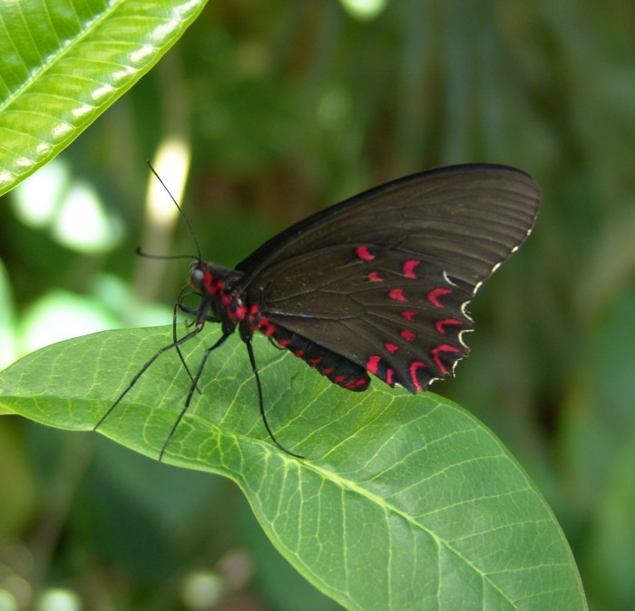 5.) You went on rad field trips to the Butterfly Pavilion, Denver Museum of Nature & Science, and Denver Art Museum.