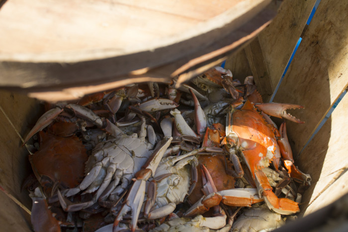 2. Crabs