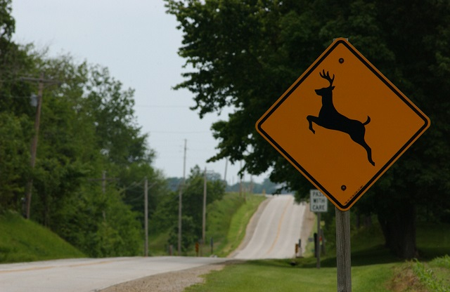 5. Deer