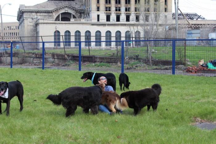 13) PetSmart P.U.P. Detroit Dog Park