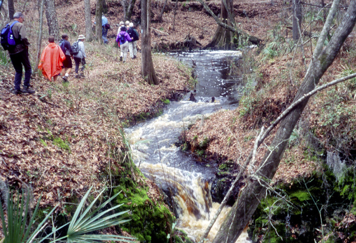 5. Camp Branch Conservation Area, White Springs, FL