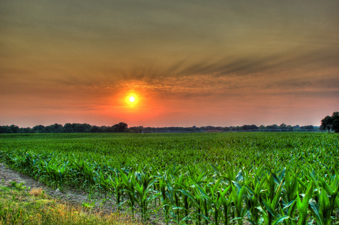 11) Gorgeous fields, where verdant emerald meets dusty red