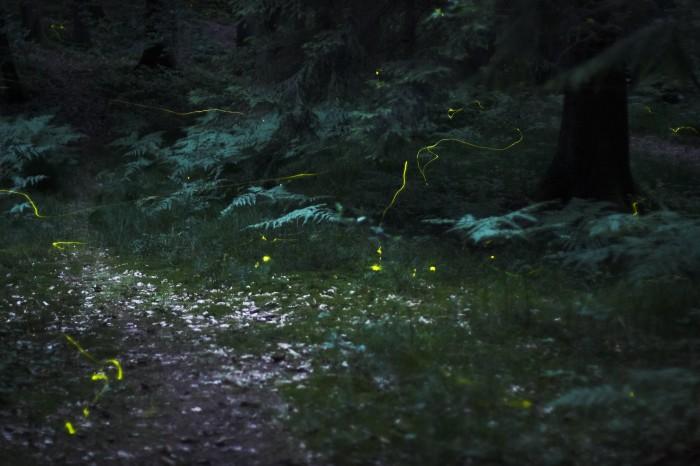 10) Lightening Bug