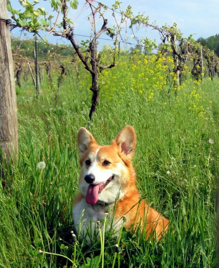 19) Hickery Creek Winery, Buchanan