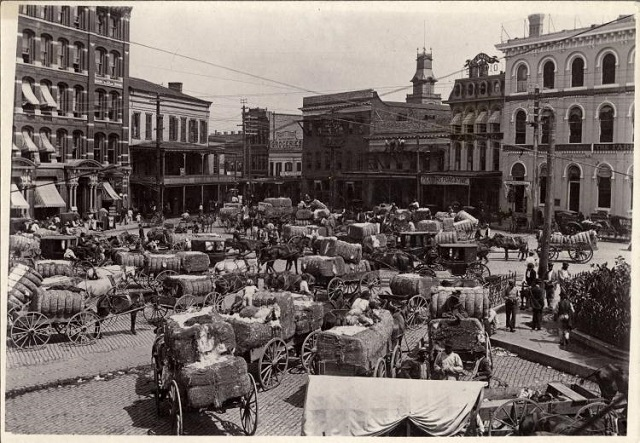 2. Cotton is being brought to market in Montgomery, 1900