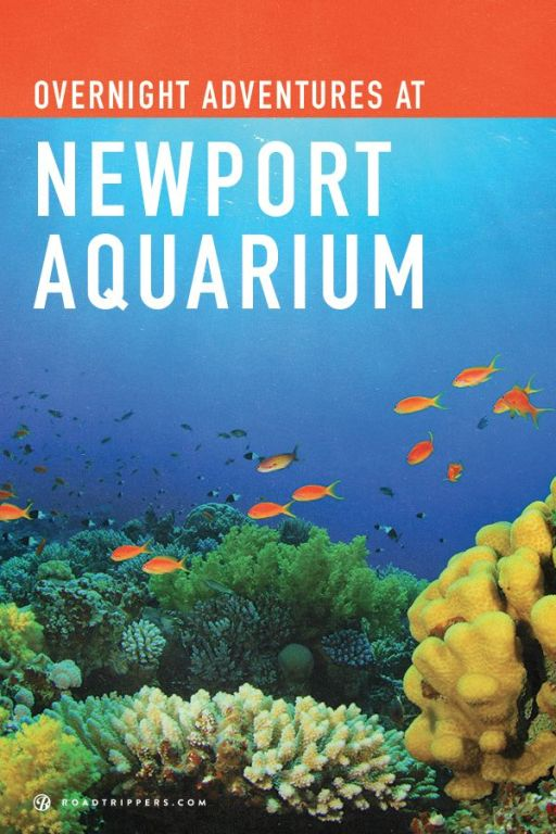 "6. The Newport Aquarium offers visitors a look at endless arrays of ocean life. Its walk through tunnels offer a ""surround"" view of aquatic life from jelly fish to sharks. Sometimes a mermaid even pops out for a swim."