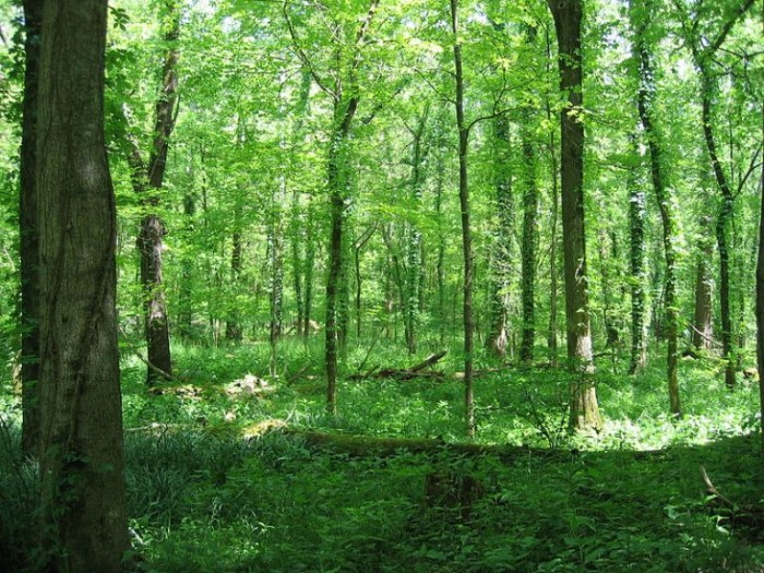 6. Otter Creek Park has beautiful woodlands, a clean river and a lot of serenity.