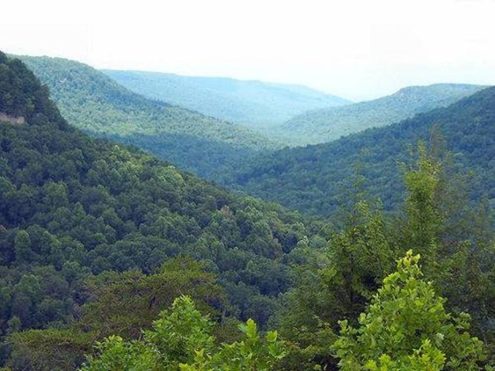 5. The Pikeville Mountains are covered in a vivid green forest during the spring and summer, and hues of gold and red in autumn.