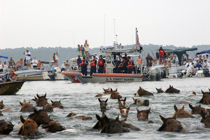 5. Chincoteague Pony Swim