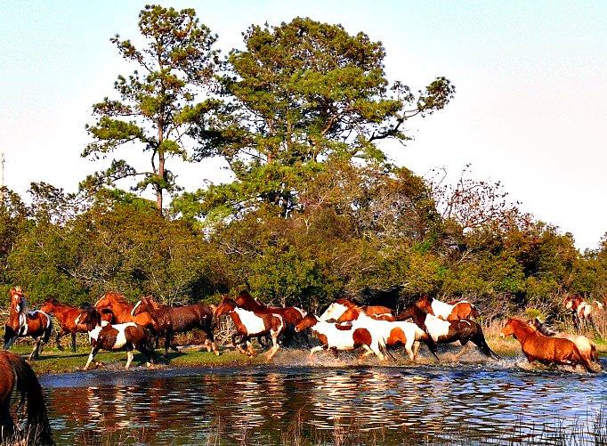Pony round up
