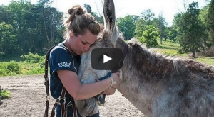 These Rescued Horses In West Virginia Will Touch Your Heart Today