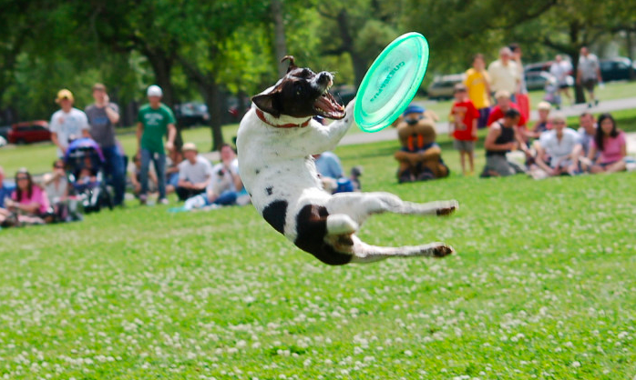 Dogs Will Absolutely Love These 10 Arkansas Dog Parks