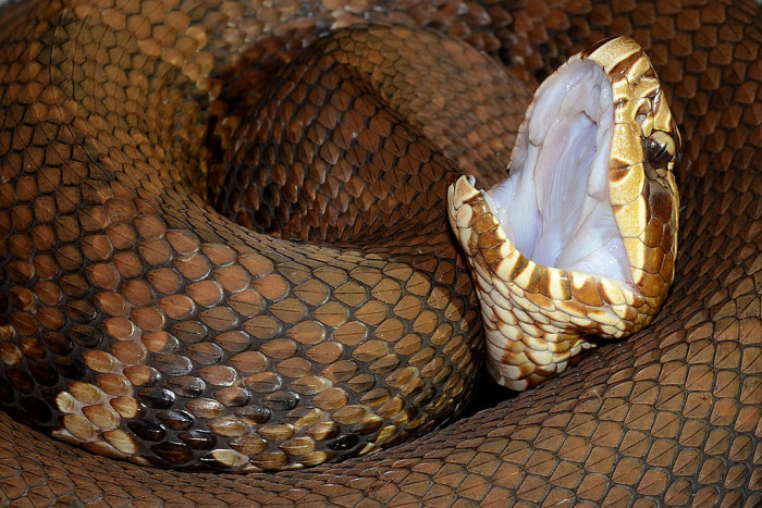 9. Snakes…they can be tricky.