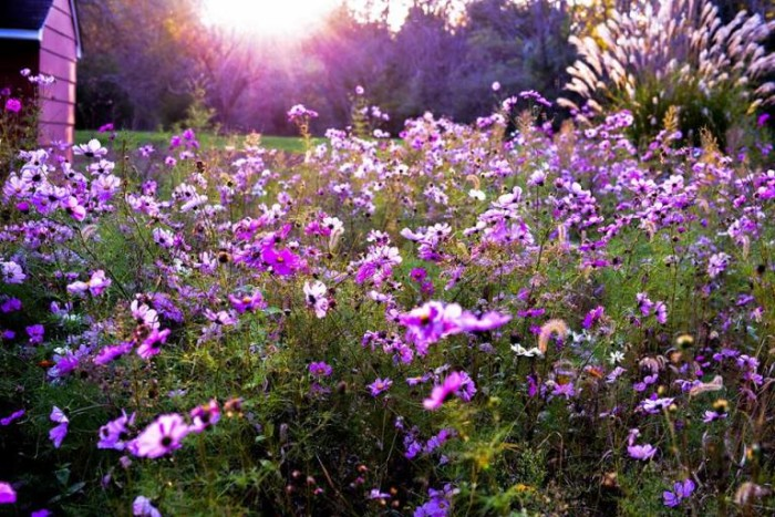 5. The spring brings an amazing array of lovely flowers and relaxing scents.