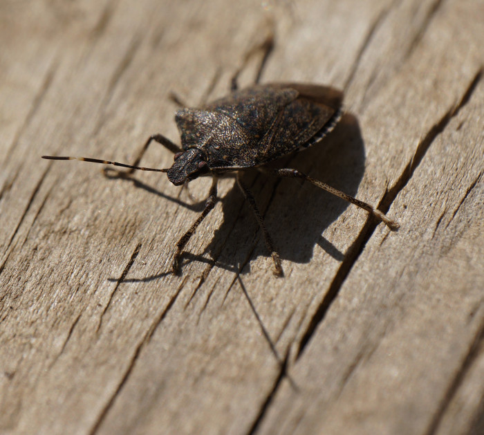 3. Cleaned 5 MILLION stinkbugs off the porch/windows/doors, etc.