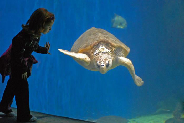 Have close encounters with marine life at the Virginia Aquarium.