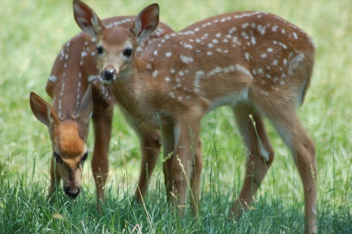 7. What's more precious than an adorable little fawn? Answer: TWO. These siblings were eating up in Oneida.