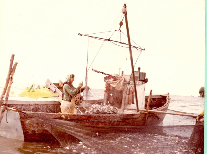 7. A woman is loading alewife into a net in Oconto County circa 1972.