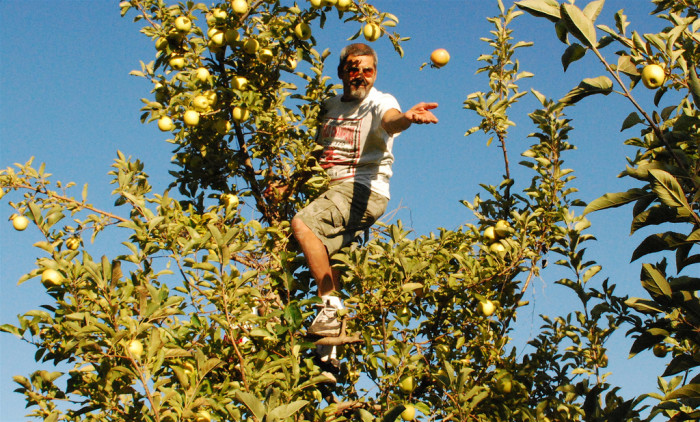 19. Gone apple picking.