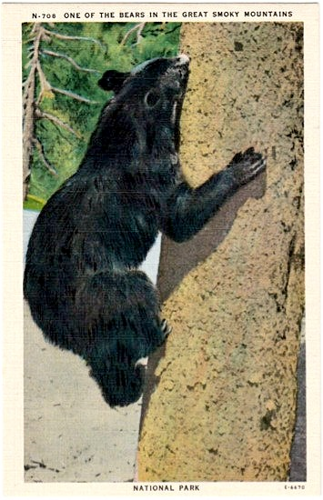 20. Oh to live in a distant, simpler time where you can share with your friends one of the terrifying yet interesting elements of the NC mountains...a bear climbing a tree.