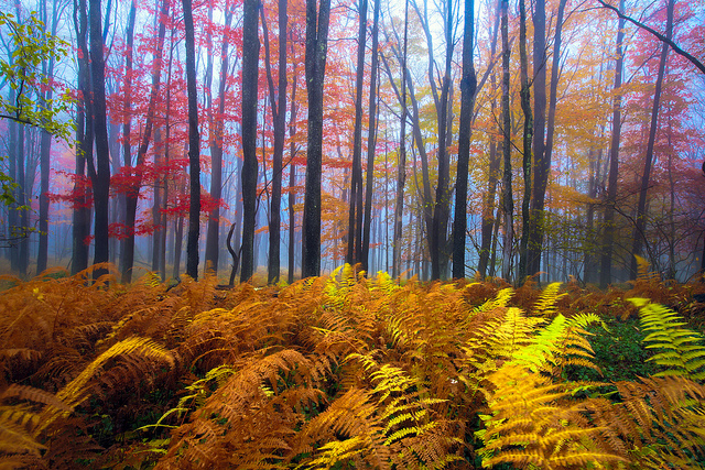 1) Look at the amazing colors at Blackwater Falls State Park.
