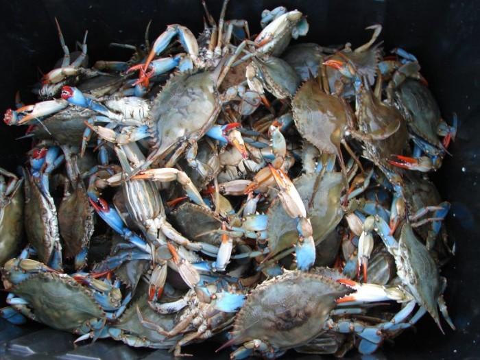 7. Crabs…Chesapeake Blues