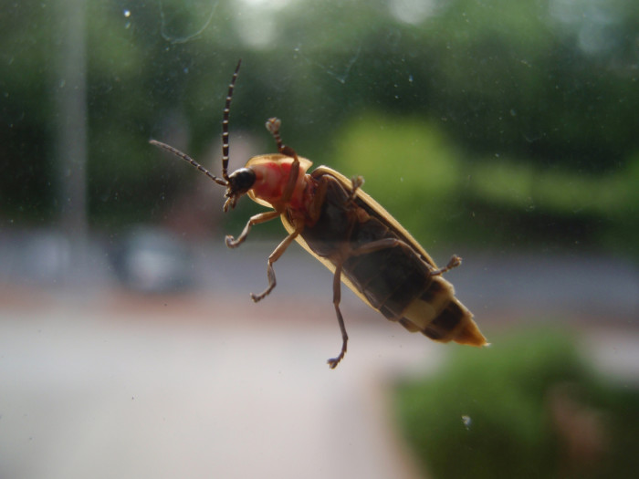 13) Bugs that aren't the size of Chattanooga.