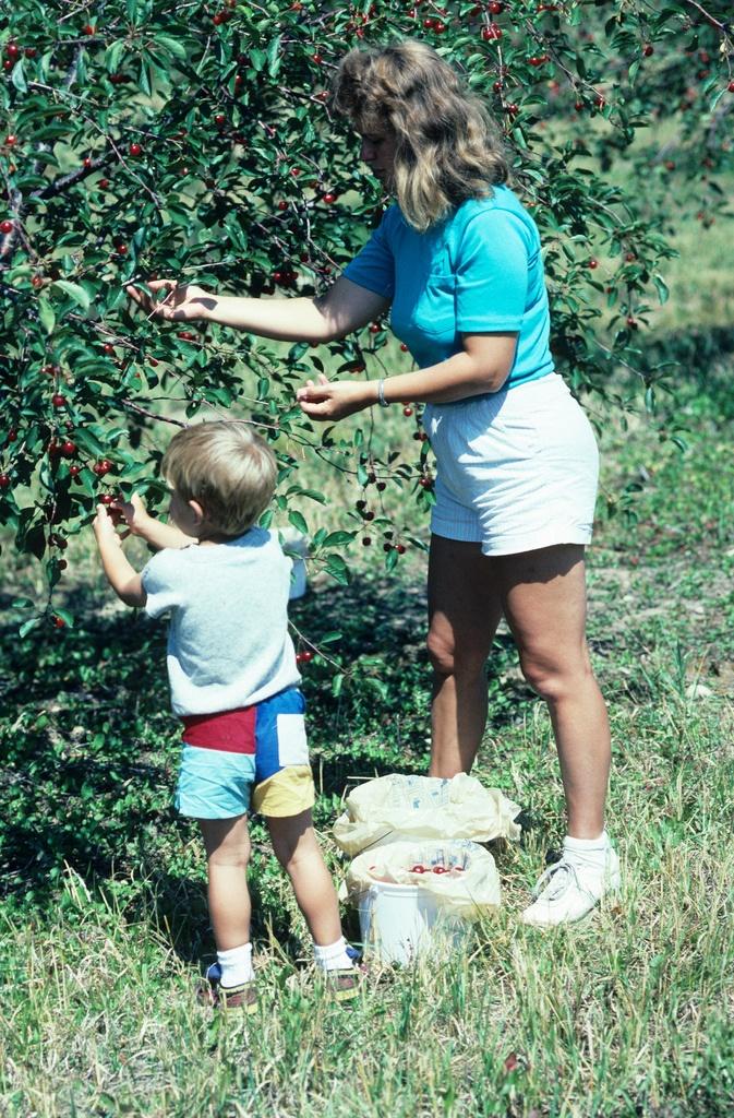 15. Enjoyed cherry picking.