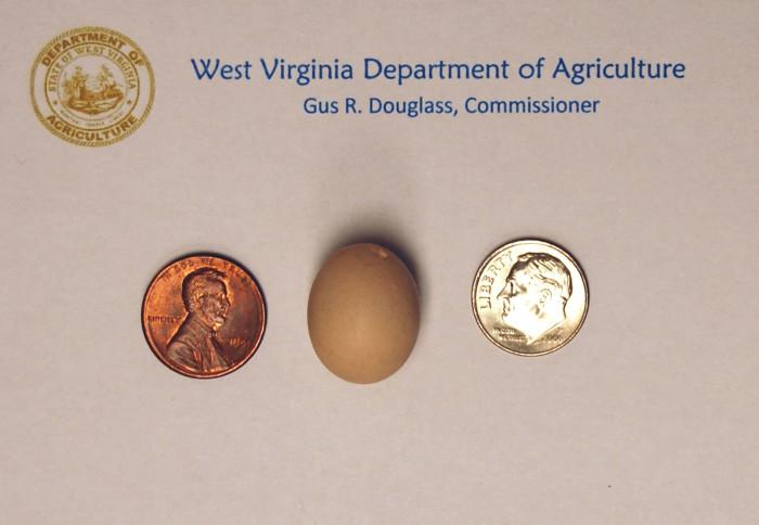 2) World's Smallest Chicken Egg