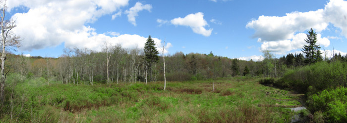 1) Cranberry Glades, which is also known as the Glades, are small five bogs in Pocahontas County, West Virginia.