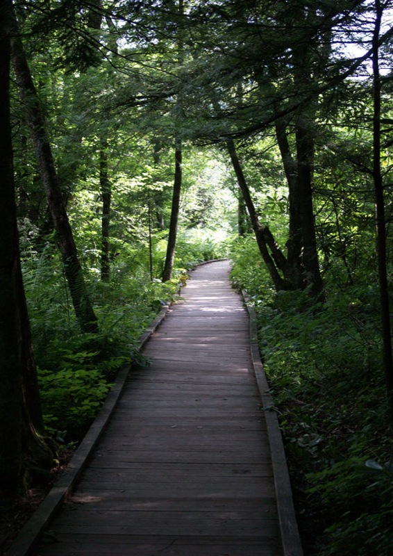 The Monongahela National Forest constructed a half-mile long boardwalk that is alongside some of the bogs.