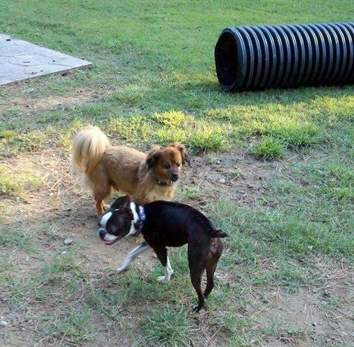 2. Hot Springs Bark Park: This dog park is located at 410 Hollywood Avenue in Hot Springs.