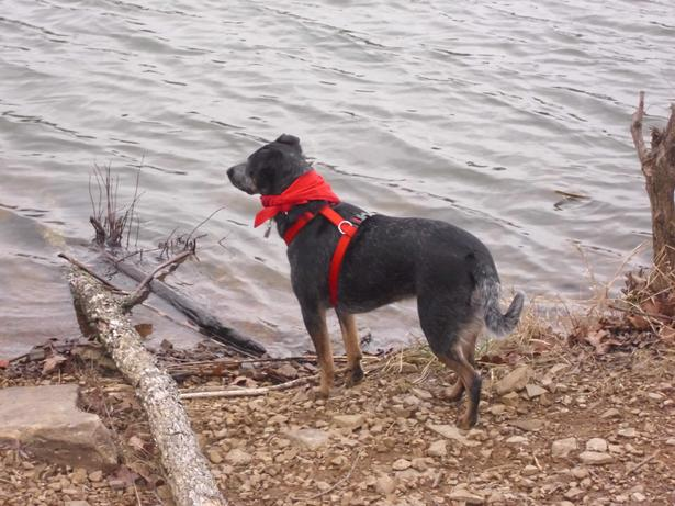 10. Lake Wilson Off-Leash Area: This northwest Arkansas park can be found on South Lake Wilson Road in Fayetteville.