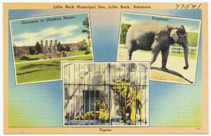13. Little Rock Zoo: Still a popular destination today, the Little Rock Zoo has been a staple of the capital city since 1926.