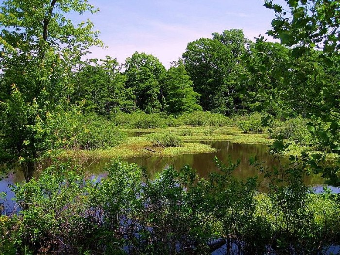13. Moro Bay State Park: Take a tour of one of the most popular fishing and water sport areas in south central Arkansas where Moro Bay and Raymond Lake join the Ouachita River at Moro Bay State Park.