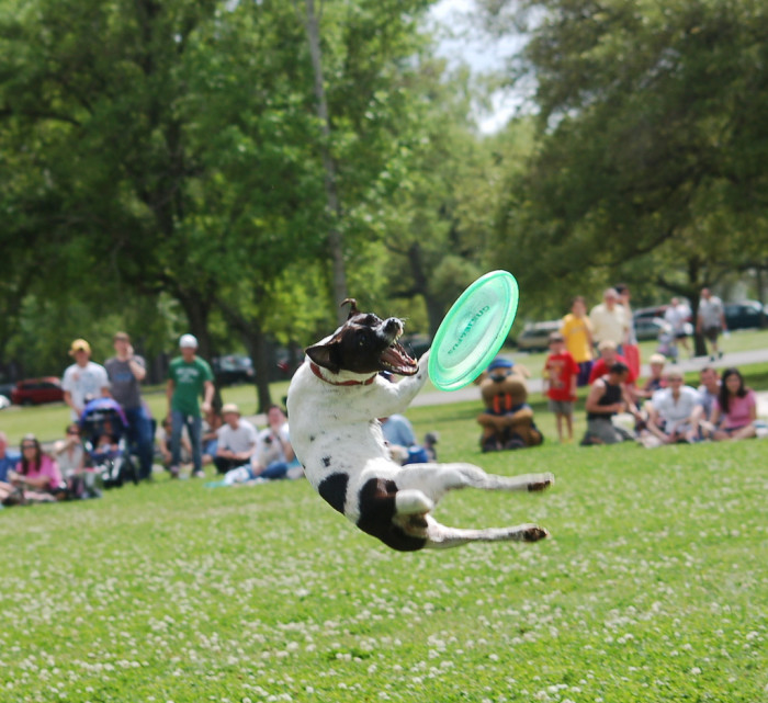 1. 4 Paws Park: This park is located on 400 Hyman Drive in Maumelle.