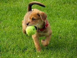 4. Jacksonville Dog Park: This park is located at Park Street and Trickey Lane in Jacksonville, Arkansas.