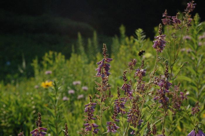 10. View the oldest public wildflower garden in the US!