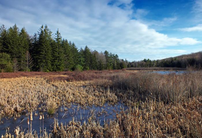 9. Black Moshannon State Park, Centre County