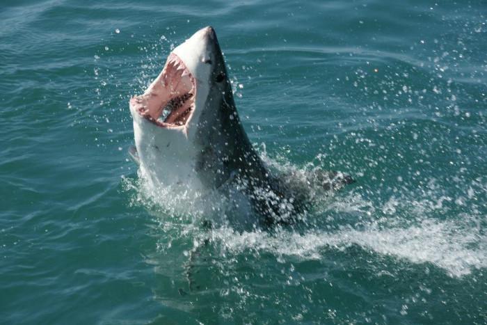 4. Sharks