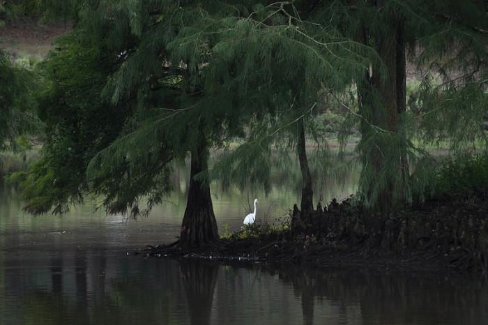 7. A white egret at Langan Municipal Park in Mobile, Alabama.