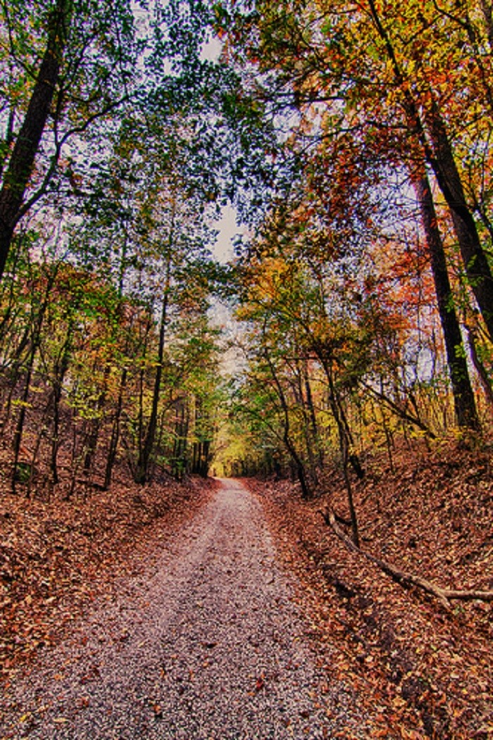 4. The walking trails at Red Mountain Park in Birmingham, Alabama.