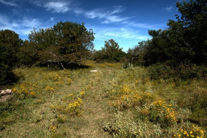 10) Brazoria National Wildlife Refuge (Freeport)