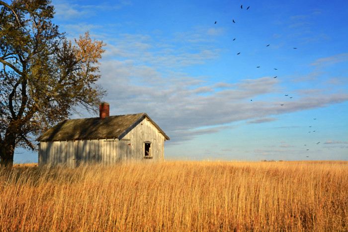 10. This old farm building in rural Iowa stands abandoned in a golden field
