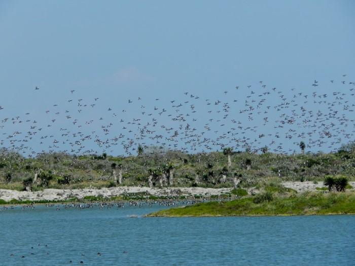 12) Laguna Atascosa National Wildlife Refuge (Los Fresnos)