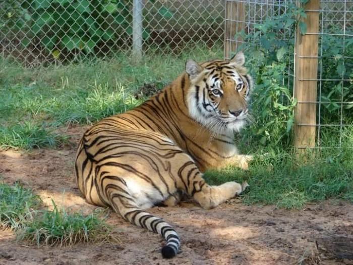 11) Tiger Creek Wildlife Refuge (Tyler)